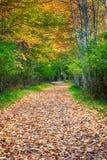 Jesień kolorowa droga obraz stock