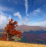 jesień kolorowa ja kształtuję teren Obraz Royalty Free