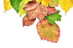 Jesień kolorowi Liść obraz royalty free