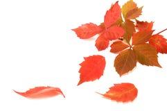 Jesień kolorowi liść Zdjęcie Royalty Free