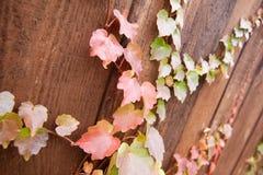Jesień kolorowi liście na drewnie Obraz Royalty Free