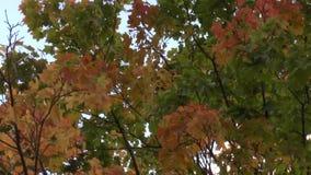 Jesień kolorowi liście w lekkim popióle zbiory