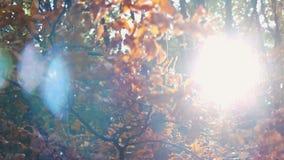 Jesień kolorowi liście z słońcem zbiory