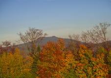 Jesień kolorowy czerwony pomarańczowy las, drzewa i wzgórze w złotym l Fotografia Royalty Free