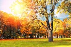 Jesień kolorowy krajobraz w pogodnym jesień krajobrazu parku zaświecał światłem słonecznym - jesień park w świetle słonecznym Zdjęcia Stock
