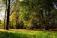 Jesień kolorowy krajobraz z yellowed jesieni drzewami przy zmierzch jesieni widokiem yellowed jesień las w świetle słonecznym Zdjęcie Stock