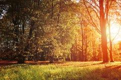 Jesień kolorowy krajobrazowy widok pogodny jesień las Obrazy Royalty Free
