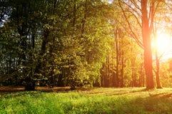 Jesień kolorowy krajobrazowy widok pogodny jesień las Zdjęcia Stock