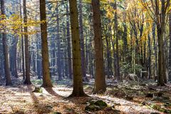 Jesień kolorowy las z cudownym światłem słonecznym Obraz Stock