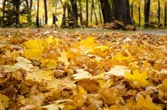 Jesień koloru żółtego liści warstwa na gound zbliżeniu fotografia stock