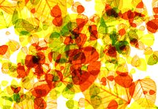 jesień koloru liść Zdjęcie Stock