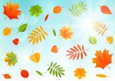Jesień koloru liście Obrazy Royalty Free