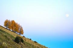 Jesień koloru osikowy gaj na nachylenia wzgórzu obraz stock