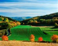 jesień koloru paleta fotografia royalty free