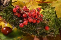 Jesień kolory Obraz Stock