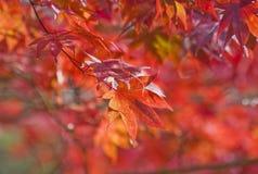 Jesień kolory Obrazy Stock