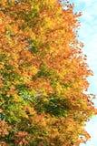 Jesień kolory Drzewa w spadku Żółty ulistnienie Piękno jesień zdjęcie stock