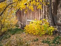 Jesień kolory i stara stajnia Obraz Stock
