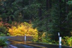Jesień kolory na McKenzie przepustce Przechodzą Scenicznego Byway Zdjęcie Royalty Free
