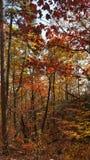 Jesień kolory w Północnym Gruzja góry lesie Zdjęcie Royalty Free