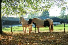 Jesień koniki kąpać się w słońcu obraz royalty free