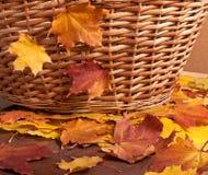Jesień kosz Obraz Stock