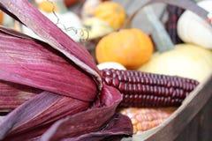 Jesień Koszykowy Arrangemnt z Indiańską kukurudzą Fotografia Stock