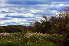 Jesień krajobraz Żółci drzewa, niebieskie niebo i jezioro, Natury sceneria w spadku Fotografia Stock