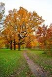 Jesień krajobraz - ścieżka w parku pod drzewem z Złotym lea zdjęcie royalty free