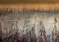 Jesień krajobraz, żółci drzewa blisko spokojnej rzeki zdjęcia royalty free