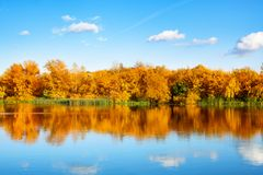 Jesień krajobraz, kolor żółty opuszcza drzewa na brzeg rzekim na niebieskim niebie i biel chmurnieje tło na słonecznym dniu, odbi obraz stock