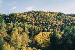 Jesień krajobraz Las, rzeka, kamienie, skała, opuszcza fotografia stock
