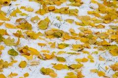 Jesień krajobraz Liście są żółci na pierwszy śniegu kolor Zdjęcia Royalty Free