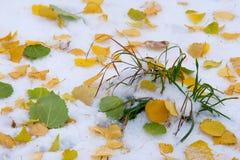 Jesień krajobraz Liście są żółci na pierwszy śniegu kolor Obrazy Stock