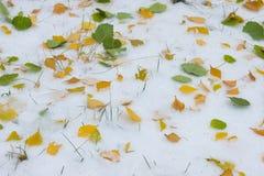 Jesień krajobraz Liście są żółci na pierwszy śniegu kolor Fotografia Royalty Free