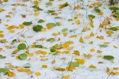 Jesień krajobraz Liście są żółci na pierwszy śniegu kolor Obrazy Royalty Free