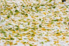 Jesień krajobraz Liście są żółci na pierwszy śniegu kolor Zdjęcie Royalty Free