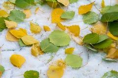 Jesień krajobraz Liście są żółci na pierwszy śniegu kolor Zdjęcie Stock