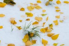 Jesień krajobraz Liście są żółci na pierwszy śniegu kolor Obraz Stock