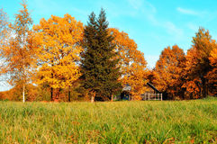Jesień krajobraz - mały dom w jaskrawych pomarańczowych jesieni drzewach w pogodnej jesieni pogodzie Obraz Royalty Free