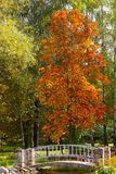 jesień krajobraz opuszczać pomarańczowego drzewa zdjęcie royalty free