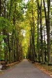 Jesień krajobraz - piękna jesieni droga przemian w parku Stary wysoki li Zdjęcie Stock