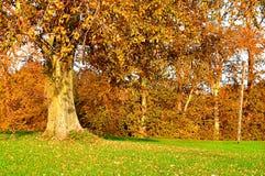 Jesień krajobraz pogodny jesień park Yellowed jesieni topola w parku - kolorowy jesień krajobraz w pogodnej pogodzie Zdjęcia Stock