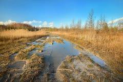 Jesień krajobraz przeciw błękitowi Obrazy Stock