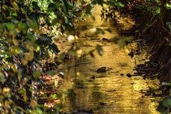 Jesień krajobraz, skrada się strumienia Zdjęcia Royalty Free