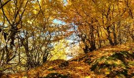 Jesień krajobraz strzelający w talish górach zdjęcie stock