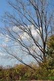 Jesień krajobraz w łąkowym terenie Obraz Stock
