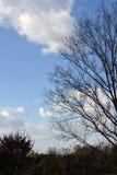 Jesień krajobraz w łąkowym terenie zdjęcia stock