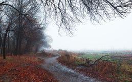 Jesień krajobraz w ciężkiej mgle Zdjęcia Royalty Free