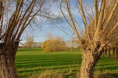 Jesień krajobraz w Flamandzkiej wsi, obramiającej pollarded wierzbami obrazy stock